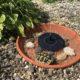 Griechische Landschildkröte, Frieda beim planschen