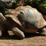 Arten von Landschildkröten – Arten Beschreibungen