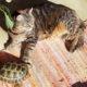 Zwei sonnenanbeter 4zehen scildkröte