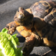 Heute nur Salat?