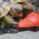 Einmal im Jahr eine Erdbeere