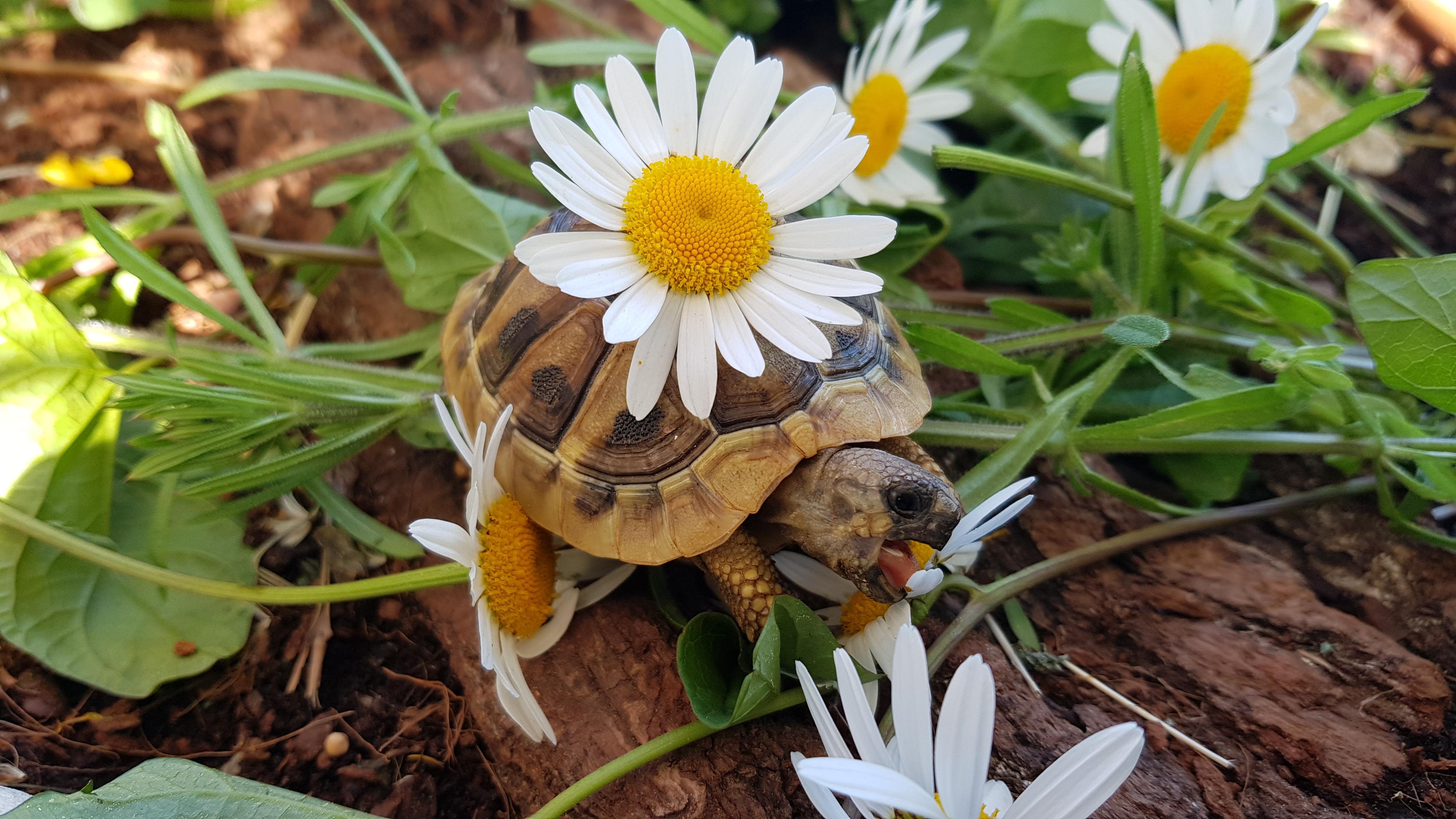 Schildkröte Doreen beim Abendschmaus