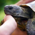 Landschildkröten Auffangstationen