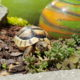 Vivi - unsere Griechische Landschildkröte