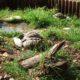 3 Griechische Landschildkröten tanken die letzten Sonnenstrahlen