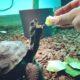 Blue meine Aldabra Schildkröte