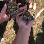 Schildkröte verschwunden
