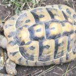 """Schildkröte """"Matata"""" vermisst"""