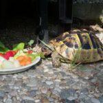 Schildkröte in Friedrichshafen vermisst