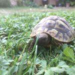 Schildkröte vermisst in Roßdorf