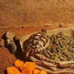 Junge Schildkröte entlaufen