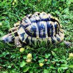 Schildkröte vermisst in Bielefeld Brackwede
