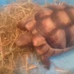 Landschildkröte in 44141 Dortmund Gartenstadt gefunden