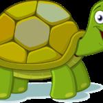 Schildkröte entlaufen in Burghausen, Nähe Hans-Kammerer-Grundschule