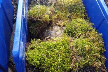 Was ist mit den Schildkröten in der Natur? Dort beträgt die Temperatur doch auch nicht konstant 4-6 Grad.