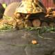 Peppa (Griechische Landschildkröte) von ihrer schönsten Seite :)