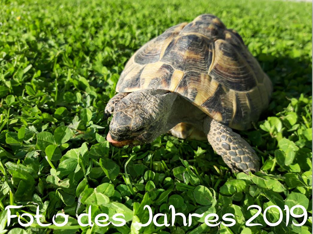 Schildkröten-Foto des Jahres 2019