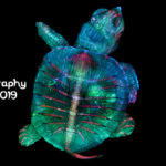 Gewinner-Foto Photomicrography Competition 2019