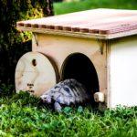 Schildkröten - Schutzhäuser, Schutzhütten