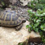 Wieviel Futter pro Tag für Schildkröte?