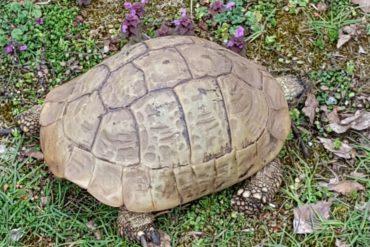 Griechische Landschildkröten vermisst in Nürnberg Zabo
