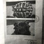 Griechische Landschildkröte vermisst in Löhne