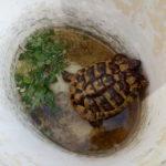 Schildkröte gefunden Bad Langensalza 99947