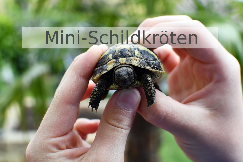 Schildkröten-Geschenkideen