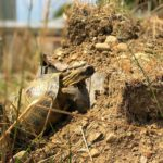 Arten von Landschildkröten - Arten Beschreibungen