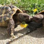 Papageienschnabel bei Schildkröten