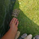 Schildkröte gefunden