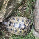 Schildkröte in Mülheim Saarn gefunden