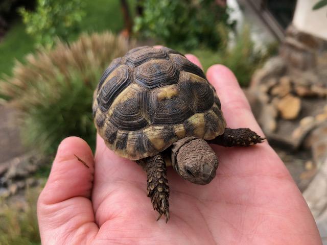 Schildkröten-Kleinanzeigen