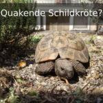 Schildkröte macht quakende Geräusche