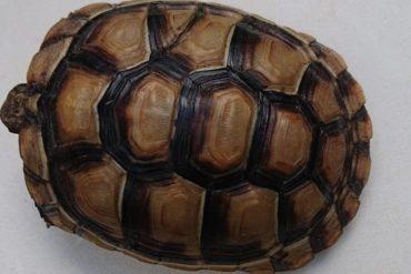 Kleine Schildkröte in Hann. Münden vermisst