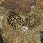 Schildkröten auf Mallorca