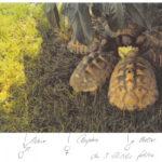Landschildkröten vermisst