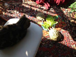 Humphrine und Errol+ Narsuada, die Katze. Eigentlich leben die Schildkröten draußen, Garten wurde Aber aktuell umgestaltet mit Bagger und allem drum und dran. Dann mussten sie ausweichen