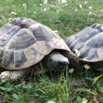 OAETOS - Hilfe für Schildkröten in Griechenland