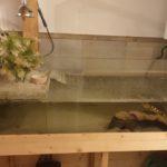 Cumberland Schildkröte