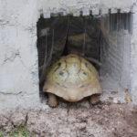 Schildkröten-Gewächshaus