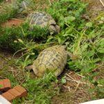 Brutapparat, Inkubator für Schildkröten