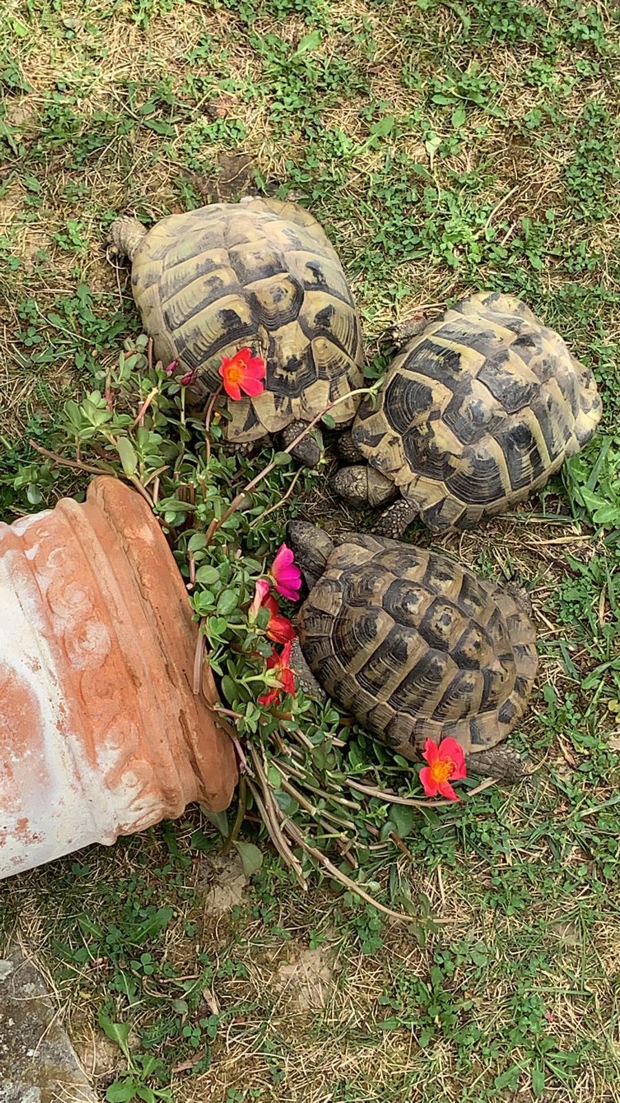 Landschildkröten in ihrem Freigehege