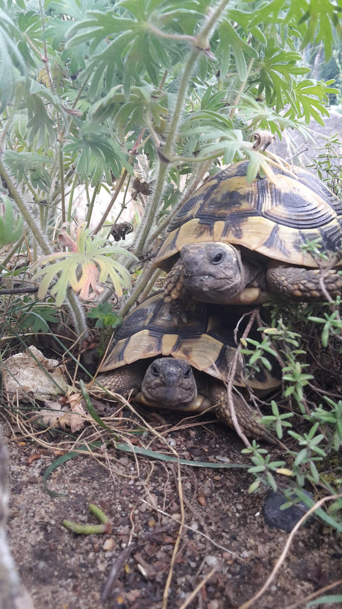Krümel und Brösel, 4 Jahre THB Schildkrötenkommunikation