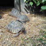 Transport / Transportieren von Schildkröten zum Tierarzt
