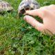 Schildkröten können auch beißen