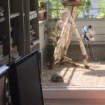 Schildkröte auf dem Balkon halten wegen Hund?