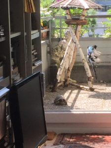 Elster und Schildkröte Moritz teilen sich das Essen ungern