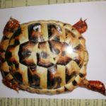 Griechische Landschildkröten 2004,2010 und 2011