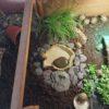 Griechische Landschildkröten THB NZ 2020 zu verkaufen
